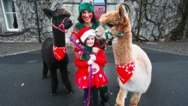 Barretstown Christmas Appeal